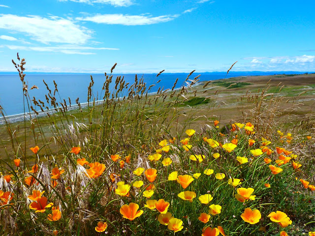 November/December 2011 - 2nd Place/  San Juan Wildflowers/  Credit: Stan Sweeney