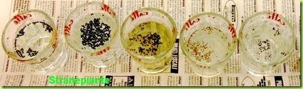lavare semi ipoclorito