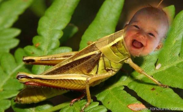 Bayi Trek-Jawa