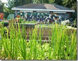 7 vickys veg growing group