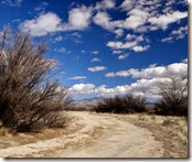 Sand Hill Cranes Wilcox AZ 047