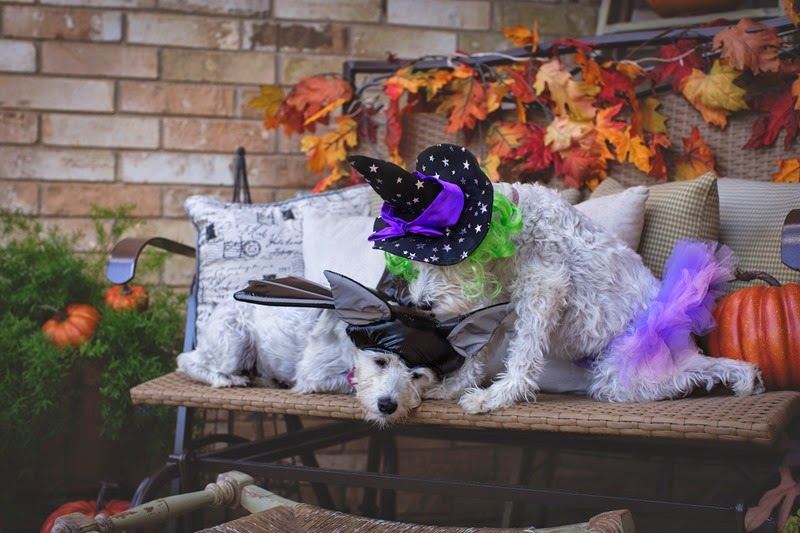 Halloweendogs1