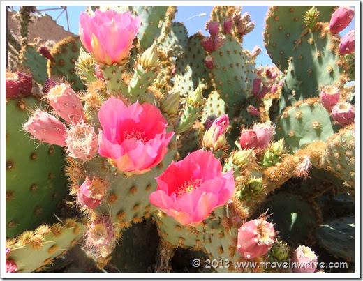 Arizona Spring 2012 237