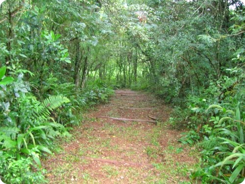 Parque Provincial Araucaria en San Pedro2
