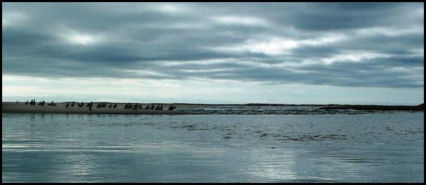 Kayaking Salt Pond & Nauset Marsh 144