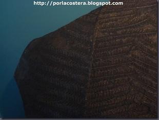 fosil helecho