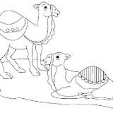 camello6.jpg