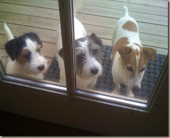 Maggie Zoe and Ziggy!  (2)