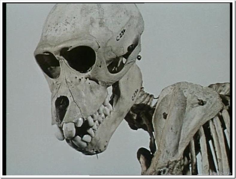 jan svankmajer historia naturae emmerdeur_526