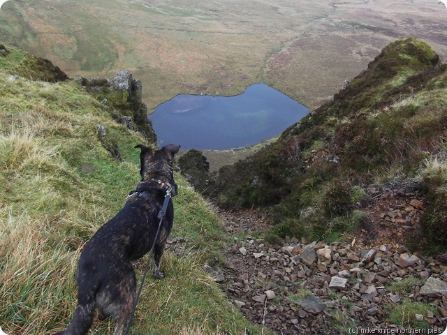 bruno considers a way down to Llyn Cyn
