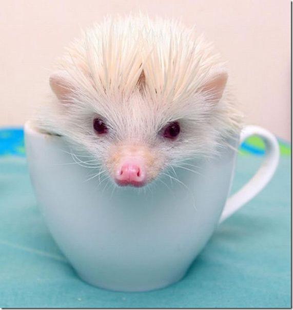 funny-animals-cute-35