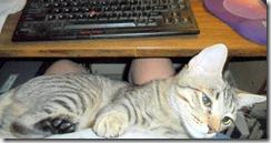 Pebbles, the Lap Cat