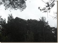 SAM_1831