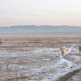 冬の放牧地。バイカル湖近くのブリアート共和国にて。