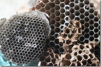 Hornet's Nest-13