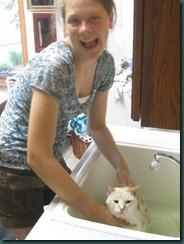 Cat Wash 051