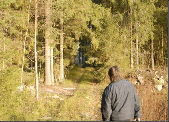 suomalainen syys metsä suppilovahvero 044