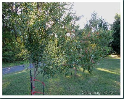 orchard0716