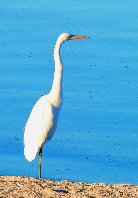 4. egret-kab