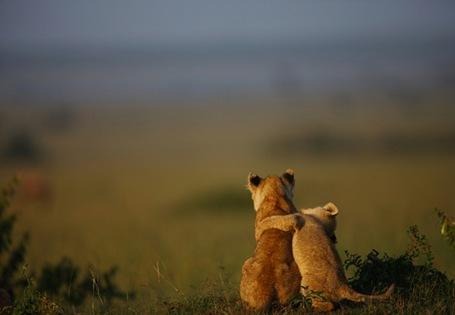 cubby love