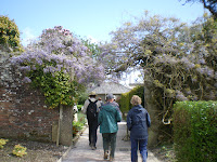 Wisteria - Lost Gardens Heligan