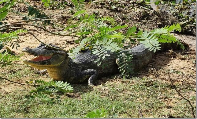 Pantanal_DSC08497