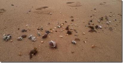 2012-06-02 - 38 Praia