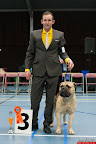 20130510-Bullmastiff-Worldcup-0307.jpg