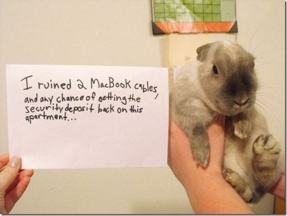 bunny-rabbit-shaming-22