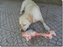 oclarinet.blogspot.com - adestrar cães (3) Jul 2013