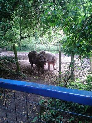 Riverbourne Community Farm