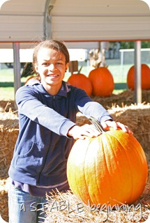 Pumpkins Madison