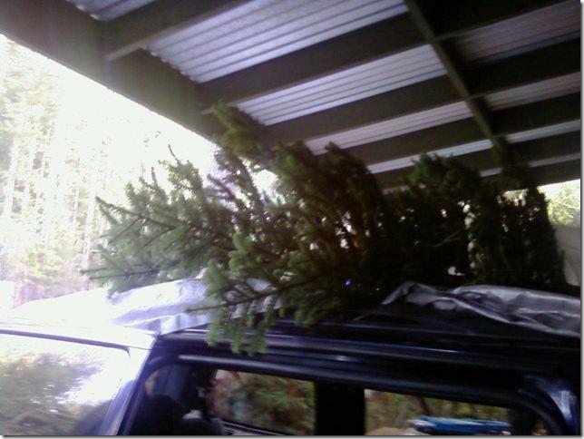 Christmas-tree-11-03