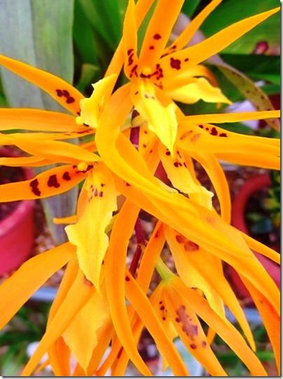 Orange flower-small