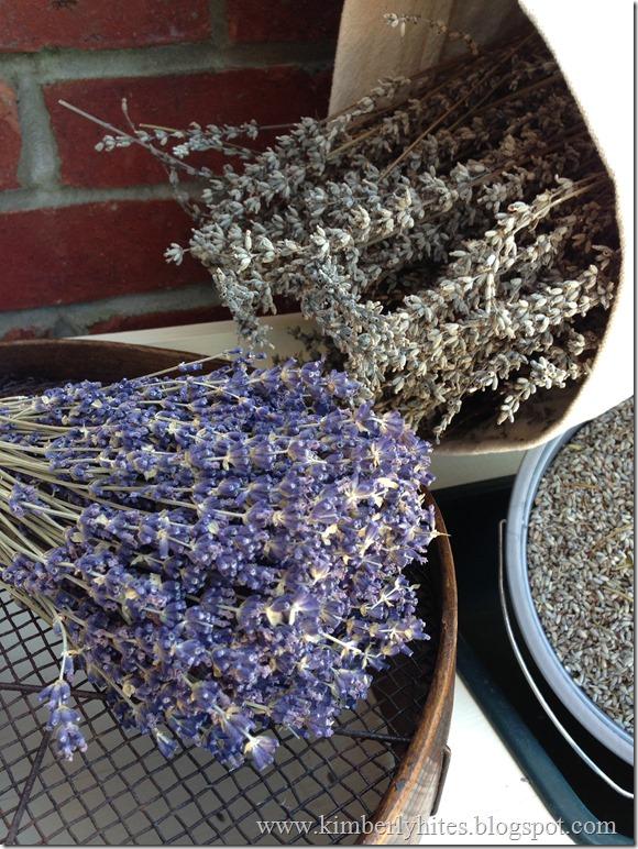 lavender_harvest (13)