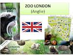 ZOO London Anglie