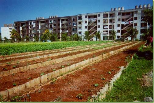 havana cuba urban farm