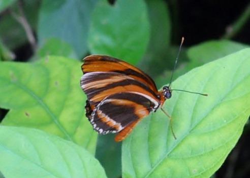 2013-07-05 butterfly pavilion (104)