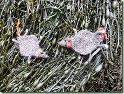 FR seaweed