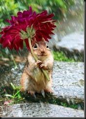 chuvas de esquilos