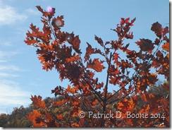 Fall Colors 2014 052