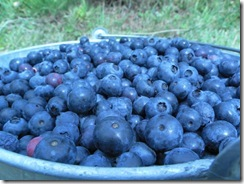 blueberries 06