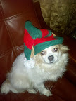 Carrie N. shared this shot of Scooby, the Christmas Elf!