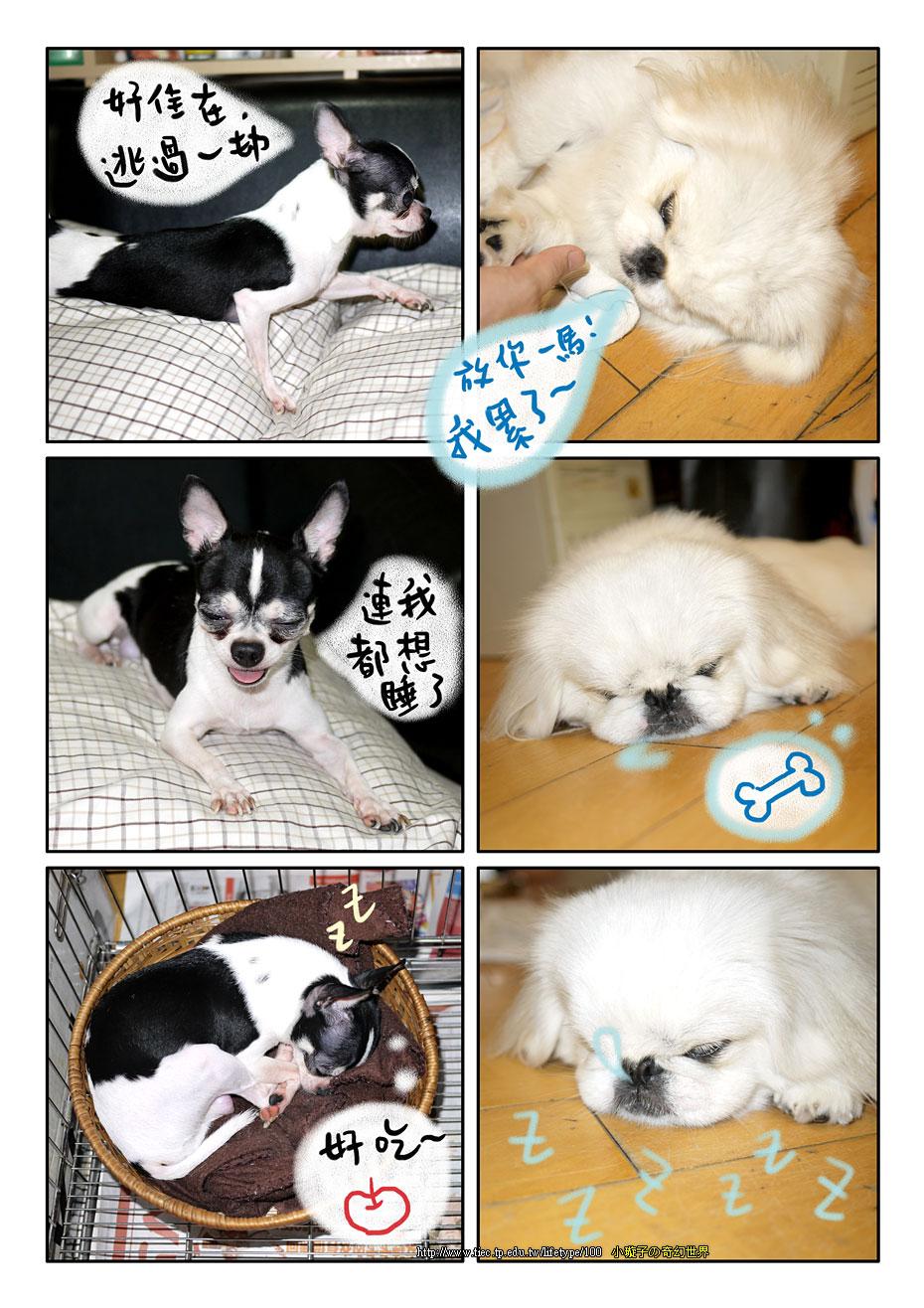 dog_blog8.jpg