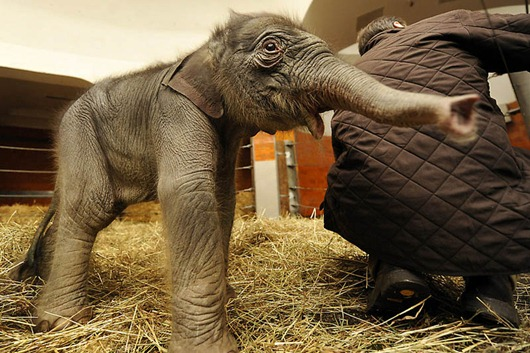 GERMANY-ANIMAL-ELEPHANT-BABY