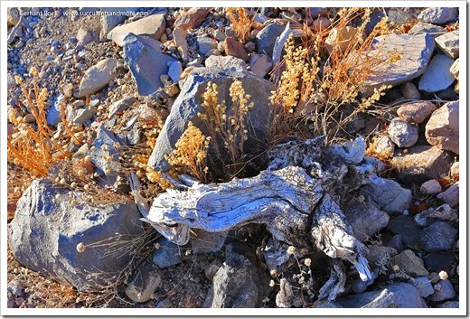 140118_MtShasta_afternoon_rocks_and_grasses