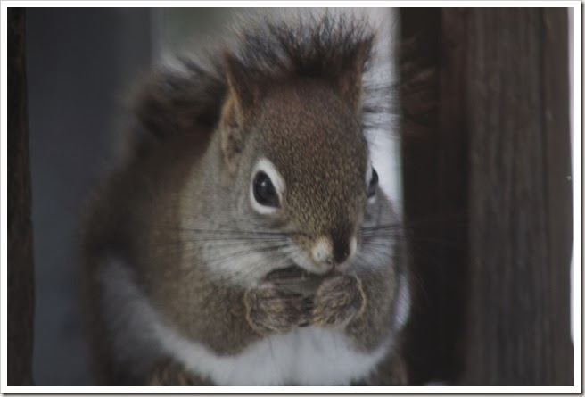 squirrel 2.14 049