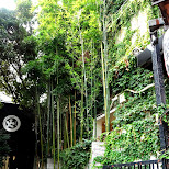 green alleyway in harajuku in Harajuku, Tokyo, Japan