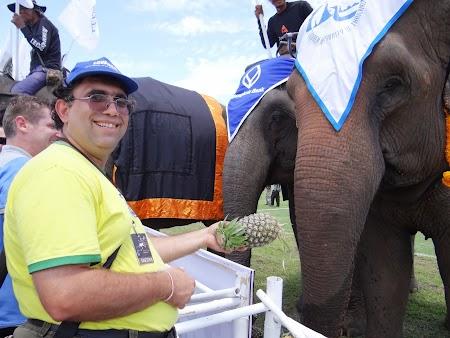 24. Hranesc un elefant.JPG