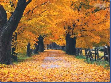 folhas_outono_amarelas